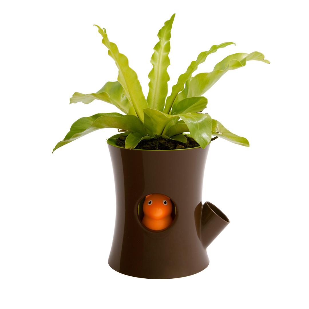 QUALY 松鼠花器(咖啡筒+綠盆)