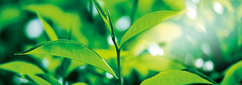 品質 自由葉的茶葉來自台灣各地的單一莊園級農場,除了保持風味特色均一,也能與茶農進行技術溝通,維持每批茶葉製作上的茶香品質;再經由專業感官品評,嚴格篩選出最佳風味。