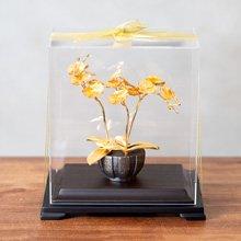 凱馨 金箔蝴蝶蘭 (3枝裝)