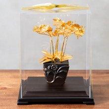 凱馨 金箔蝴蝶蘭 (6枝裝)