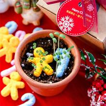 WOOPAPERS 【聖誕限定】聖誕造型種子球植栽組